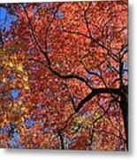 Blue Ridge Mountains Fall Foliage Metal Print