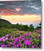 Blue Ridge Parkway Sunset - Craggy Gardens Rhododendron Bloom Metal Print by Dave Allen