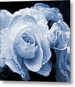 Blue Roses With Raindrops Metal Print