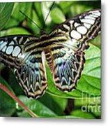 Blue Sea Butterfly Metal Print