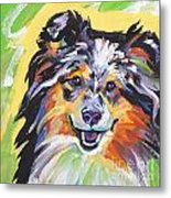 Blue Sheltie Metal Print