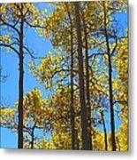 Blue Skies And Golden Aspen Trees Metal Print