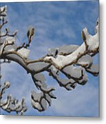 Blue Skies In Winter Metal Print by Bill Cannon