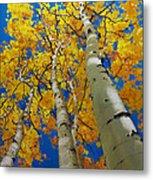 Blue Sky And Tall Aspen Trees Metal Print