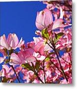 Blue Sky Art Prints Pink Dogwood Flowers Metal Print