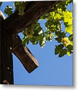 Blue Sky Grape Harvest - Thinking Of Fine Wine Metal Print