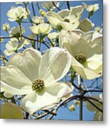 Blue Sky Spring White Dogwood Flowers Art Prints Metal Print