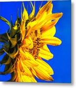 Blue Sky Sunshine Sunflower Metal Print