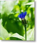 Blue Spot In The Green World - Featured 3 Metal Print