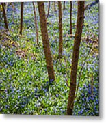 Blue Spring Flowers In Forest Metal Print