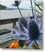 Blue Star Sea Holly Metal Print