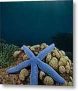 Blue Starfish In Indonesia Metal Print
