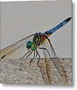 Blue Tail Dragonfly On Navarre Beach2 Metal Print