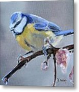 Blue Tit And Blossoms Metal Print