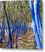 Blue Trees In Nature Metal Print