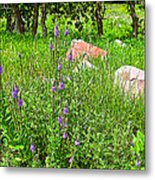 Blue Vervain And Rocks In Pipestone National Monument-minnesota  Metal Print