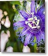 Blue Violet Metal Print