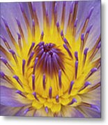 Blue Water Lily Metal Print by Heiko Koehrer-Wagner