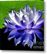 Blue Water Lily Reflection Metal Print