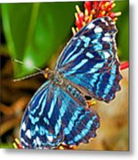 Blue Wave Butterfly Metal Print