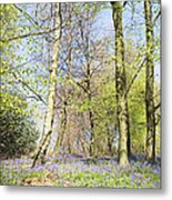 Bluebell Time In England Metal Print