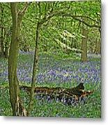 Bluebell Wood 1 Metal Print