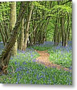 Bluebell Wood 3 Metal Print