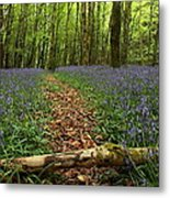 Bluebell Woods Metal Print by Peter Skelton