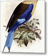 Bluebellied Roller Metal Print