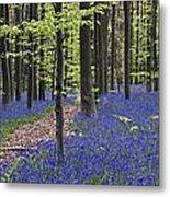 Bluebells In Beech Forest Metal Print