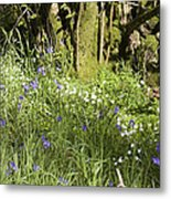 Bluebells And Greater Stitchwort Spring  Boot Eskdale Cumbria England Metal Print