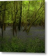 Bluebells Dream Metal Print by Peter Skelton
