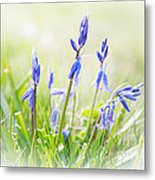 Bluebells On The Forest Metal Print