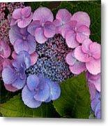 Blueberries And Cream Metal Print