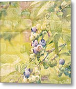 Blueberries Painted On The Wall Metal Print by Alanna DPhoto