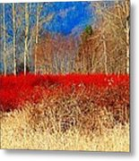 Blueberry Bushes In Winter Metal Print