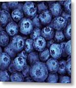 Blueberry Harvest Metal Print by Greg Vaughn