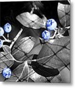Blueberry Magic Metal Print