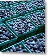 Blueberry Season In Maine Metal Print