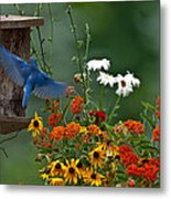 Bluebird And Colorful Flowers Metal Print