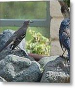 Bluejay And Mockingbird Metal Print