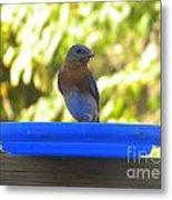 Bluebird Frisbee Metal Print