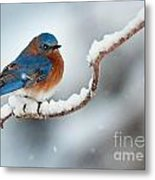 Bluebird In Snow Metal Print