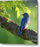 Bluebird In The Morning Metal Print