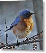 Bluebird In The Snow. Metal Print