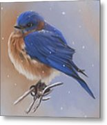 Bluebird In The Snow Metal Print