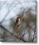 Bluebird In The Sun Metal Print