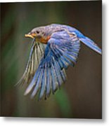 Bluebird No. 2 Metal Print