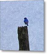 Bluebird On A Fencepost Metal Print