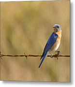 Bluebird On A Wire Metal Print